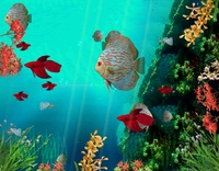 Coral Reef Aquarium 3D Animated Wallpaper – Exclusive 15% Coupons
