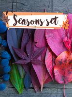 15% Off Seasons Set Coupon Code
